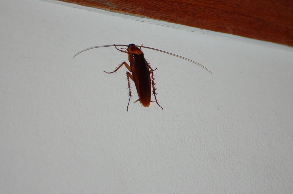 insecte du soir dans la maison gillyan9 flickr. Black Bedroom Furniture Sets. Home Design Ideas