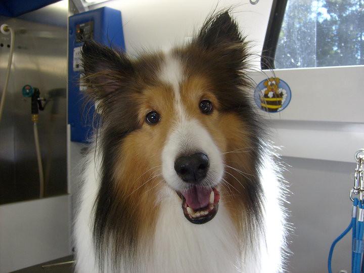 Hobart Indiana Dog Grooming