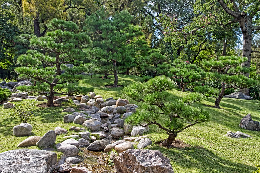 Day 223 japanese garden pine trees another scene from for Japanese garden plants and trees