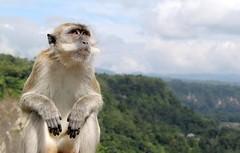 Wise Monkey by Travellingchez