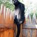 Happy Cat Bench Monday