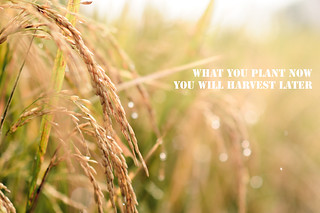 What You Plant Now You Will Harvest Later | by Fajar Nurdiansyah