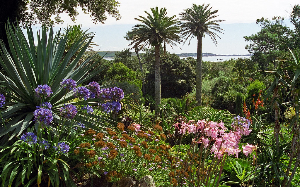 Tresco abbey gardens scilly isles uk view to sea throu for Garden trees london