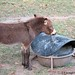 The Daily Donkey 77 a