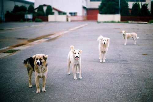 Stray dog's Power relationship | by *dapple dapple