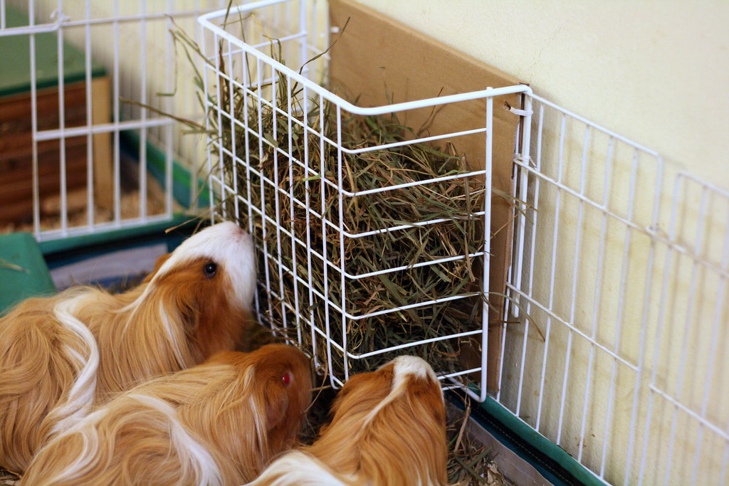 Under-Shelf Storage Basket used as Hay Feeder | Just add ...