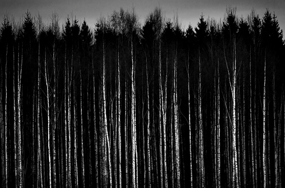 dark places forest trees - photo #39