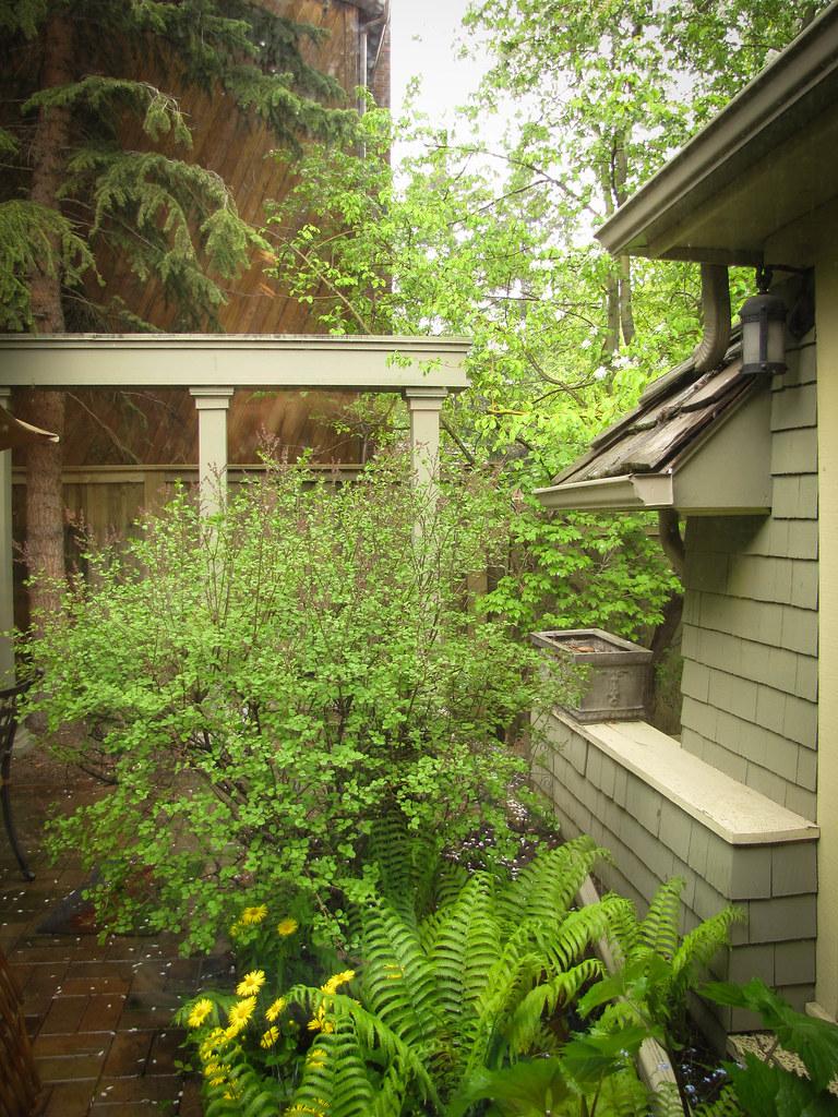 Wild Backyards :  164  June 8, 2011 A beautiful, wild backyard  Jessy Roos  Flickr
