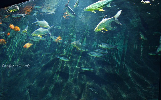 Underwater world langkawi Flickr - Photo Sharing!