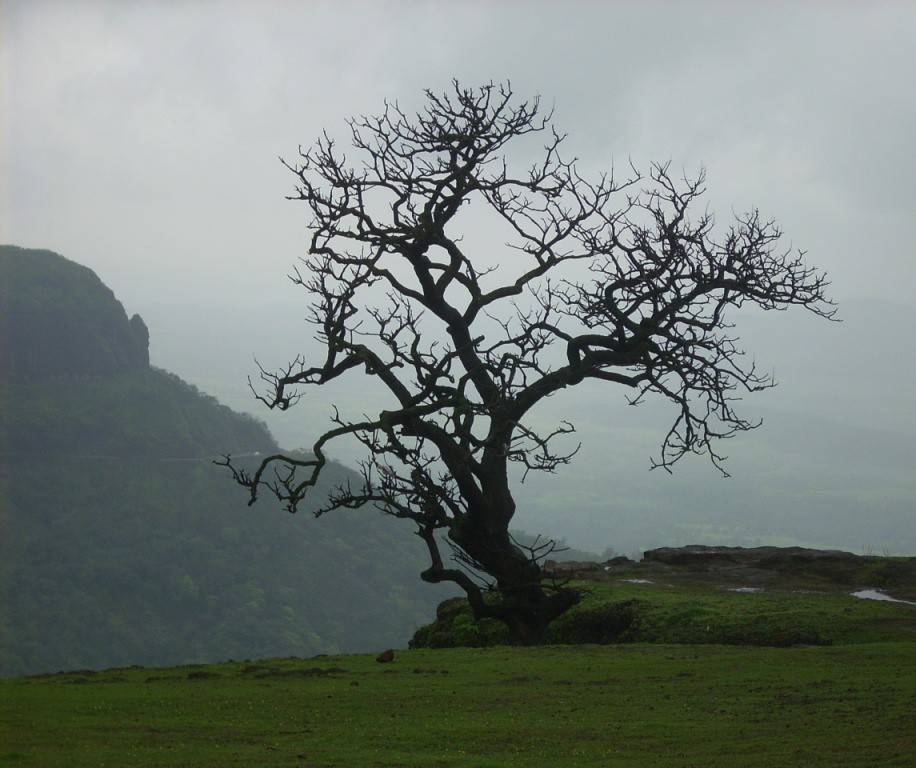 The withered tree | abhijit chendvankar | Flickr