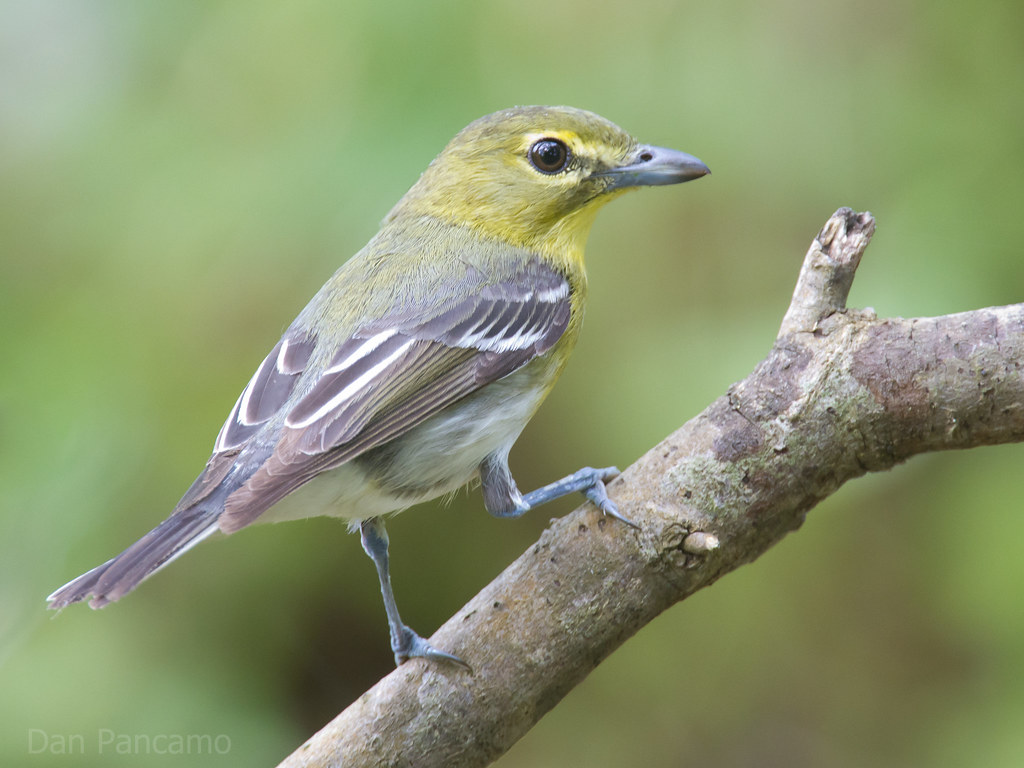 Image Result For Small Baby Birds