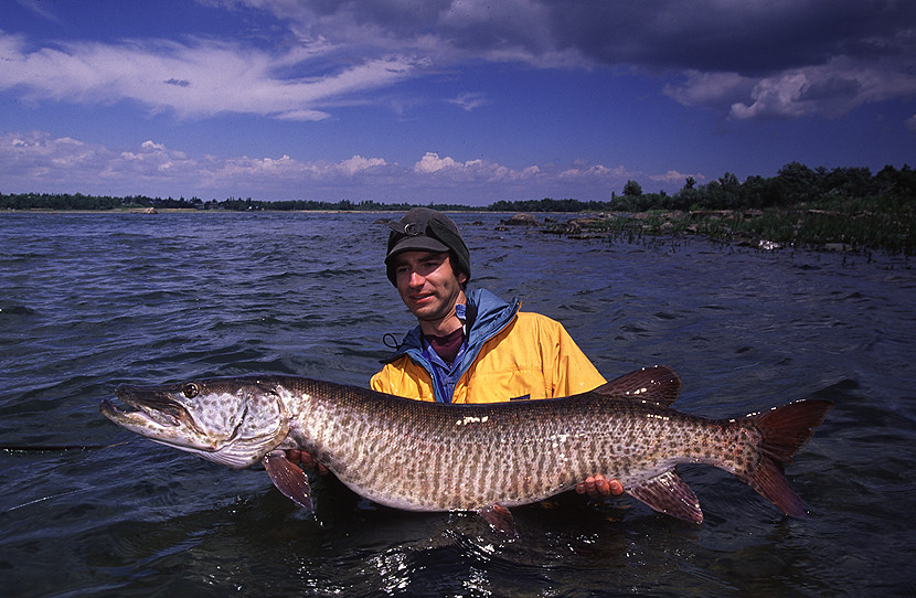 monster fish from st lawrence river marc krupa snapped