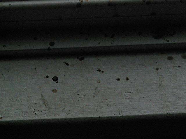Stink Bug Droppings Now I Had A Pet Cat A Few Years Ago