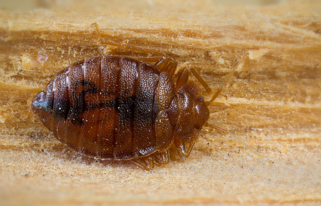 Canon F Light Bed Bugs