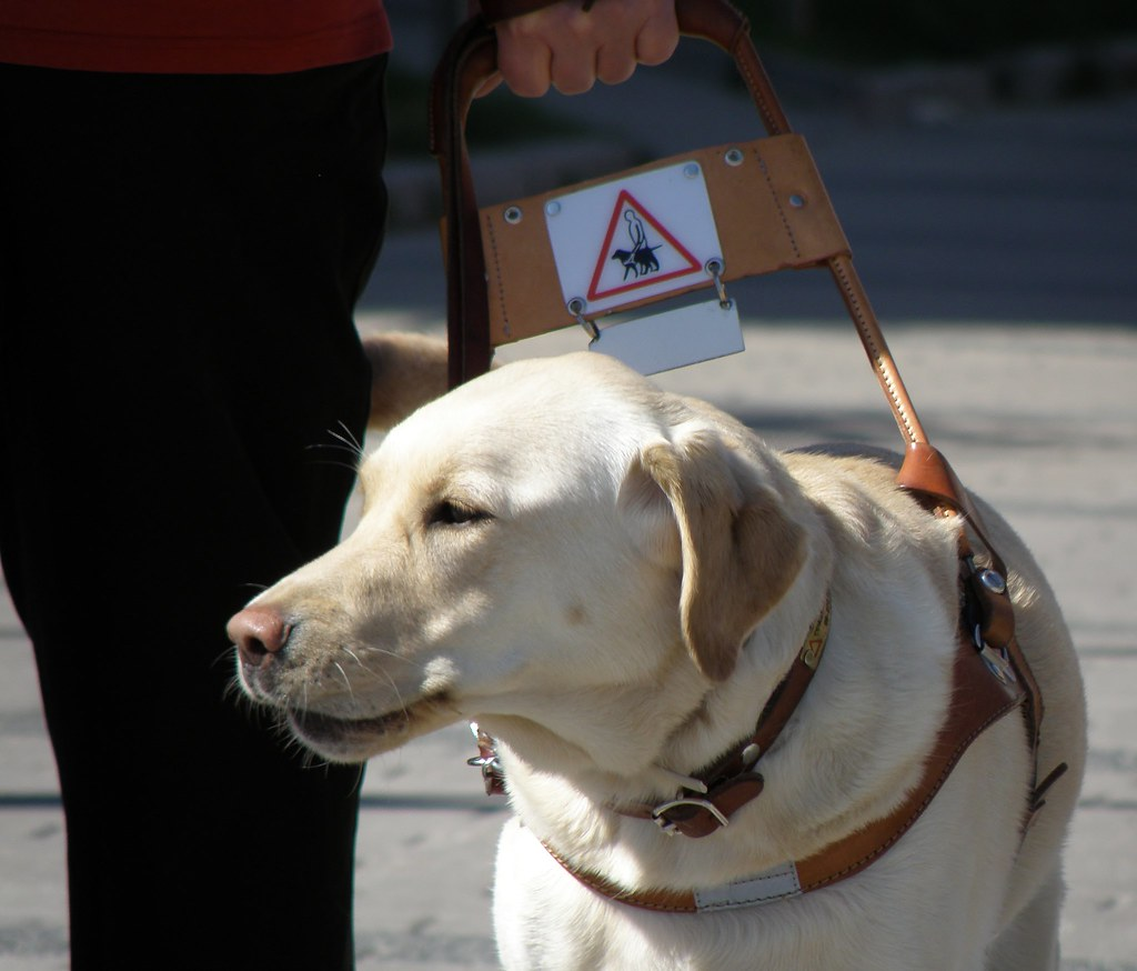 Image Result For Service Dog Training