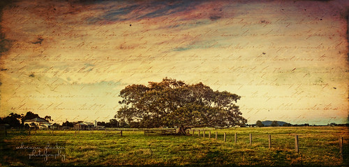 ~ the fig tree ~ (on explore/interestingness 19 May 2011 - woo!) | by Adriana Glackin