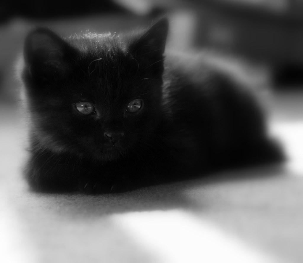 Week Old Kitten Wont Eat Cat Food