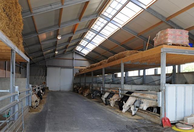 Agrarisch een warm thuis voor een koe met dierenwelzijn v flickr photo sharing - Een hoek thuis ...