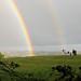 Rainbow & Horses