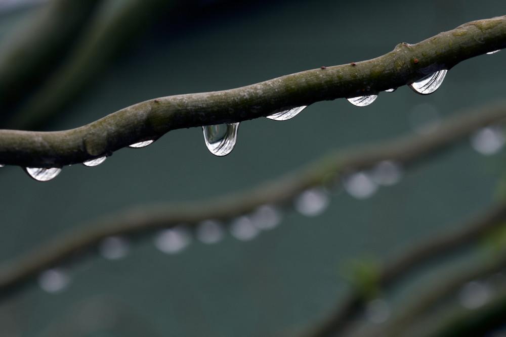 Rain Branch