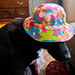 Dog in the hat