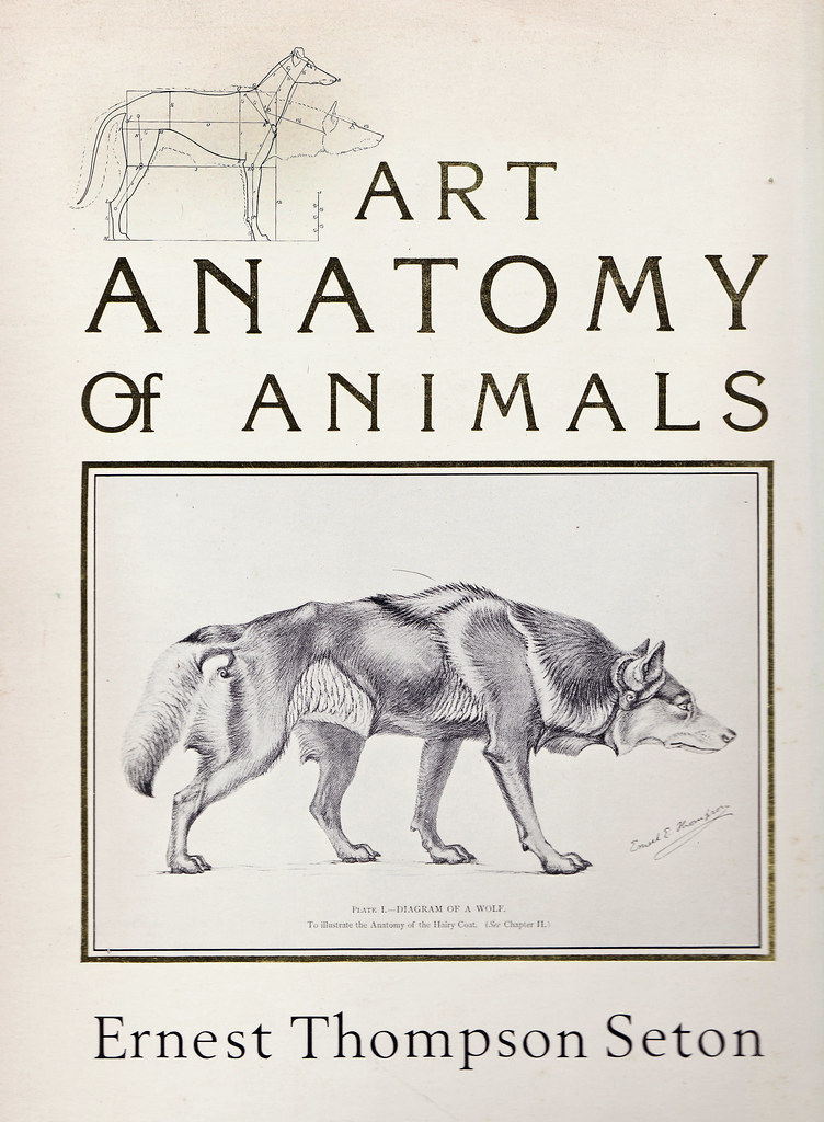 Anatomy of mammals