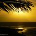 Gold Sand Palm Sunset Rocky Point