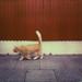 Dynamism of a Cat in Reykjavík