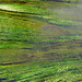 River Weed - Loire Valley