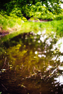 A Stream full of bokeh | by NoahWmR12