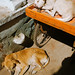 sleeping dogs, Varanasi