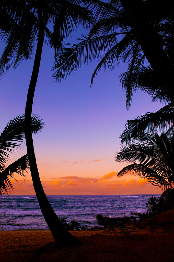 Silhouetted Palm Trees - Tropical Beach Sunset - Maui
