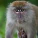 Monkey Business 1/3...IMG_7649 copy