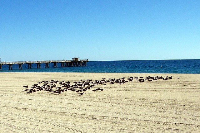 Pompano Beach Florida Weather In December