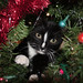 kitty in the christmas tree