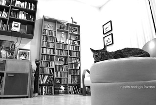 Music and cats | by Mister Blur