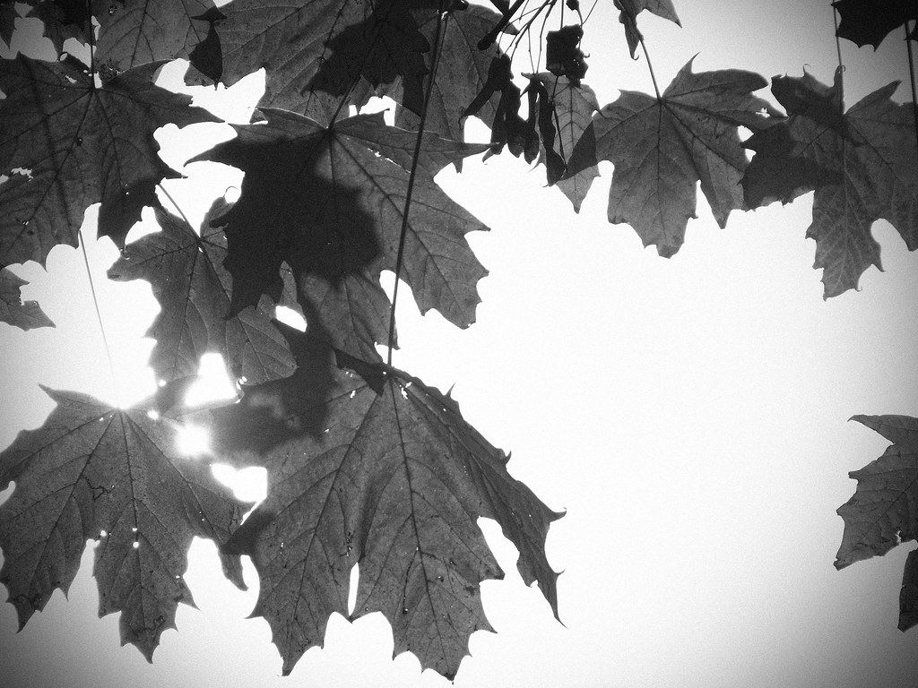 Black and White Leaves | Taken on my recent test of the ...