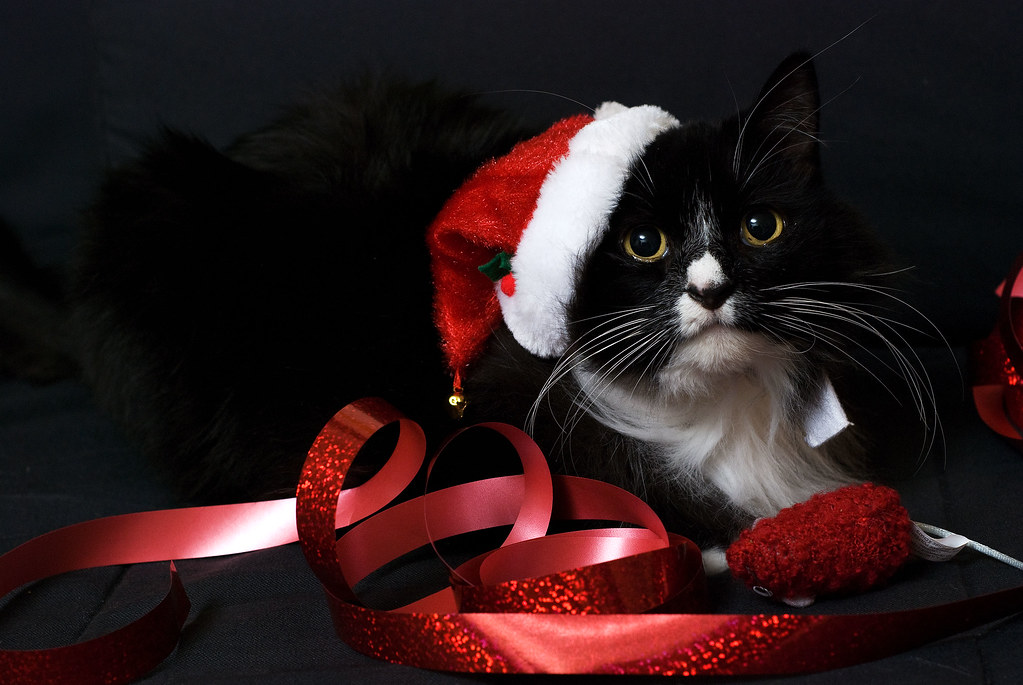 Christmas Kitty | Once again, our cat hates us right about ...