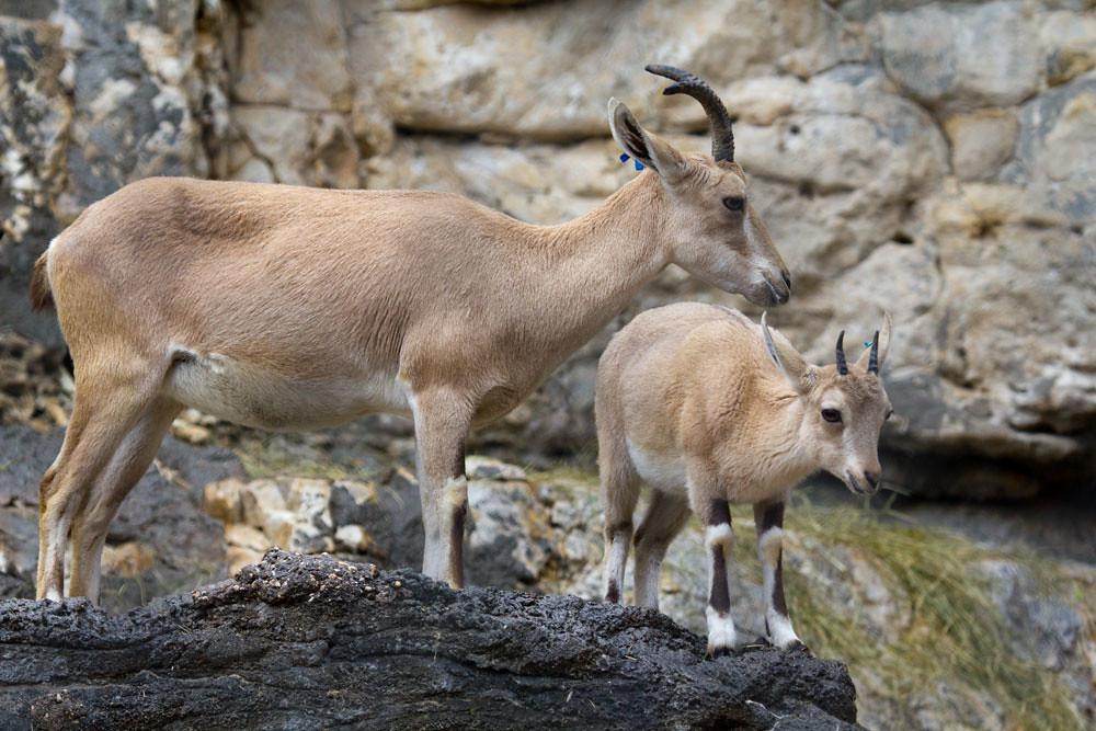 San Antonio Zoo Policy On Food And Drinks