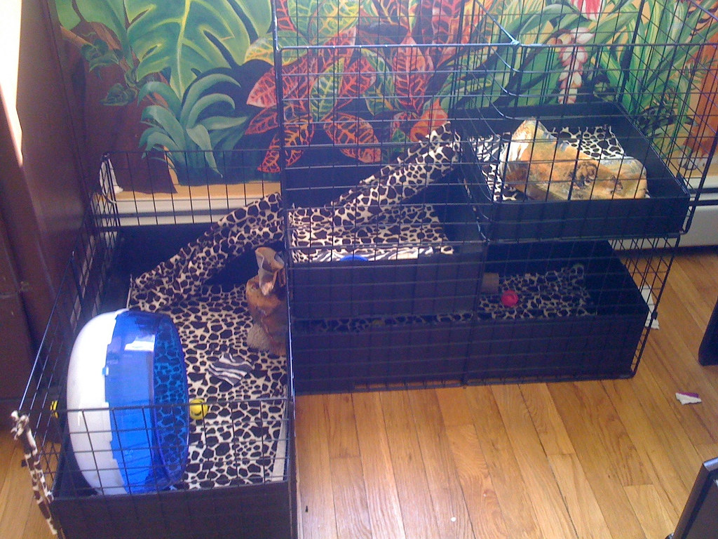 Final renovation on c c cage for our hedgehog thorn flickr for Making a c c cage