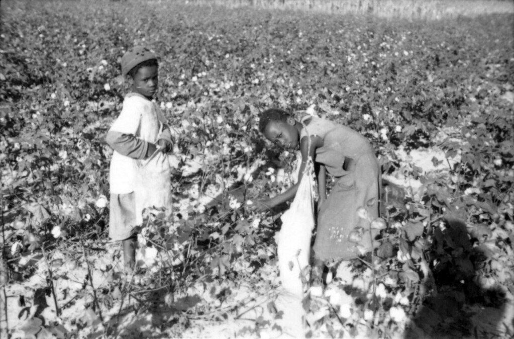 two young black girls pick cotton into their sacks