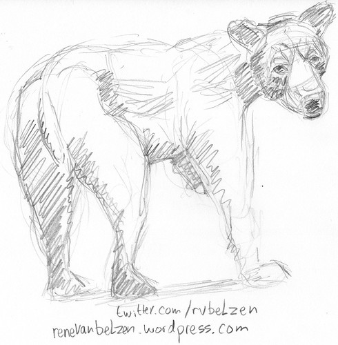 Sketching a bear from reference | by aaipodpics