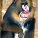 PP_Zoo_0065-6 adj