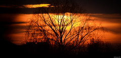 tree of sunfire - sunset by VKaresz