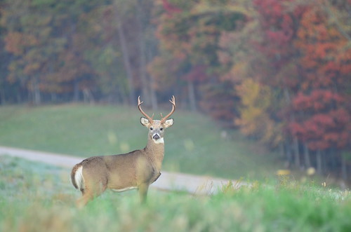 Photo of buck by Matthew Doged