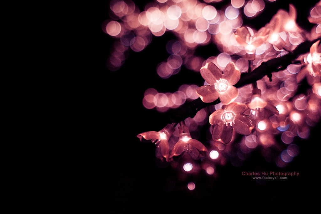 Gif Images Of Flowers Falling 8.365 - Cherry Blossom...