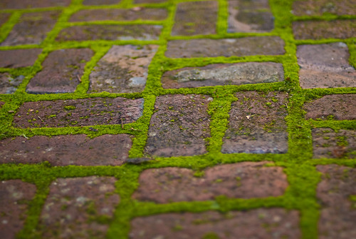 Moss Growing Between Bricks | by Gregory Jordan