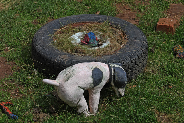 Tatton Park Dog Policy