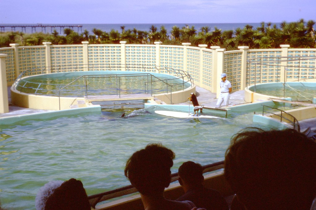 img507 | Marineland of Florida near St. Augustine – Summer ...