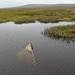 Marsh Find